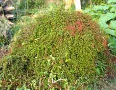 Ironplants1